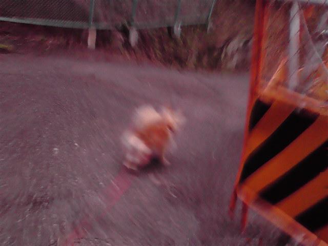 10月26日インビテーション犬