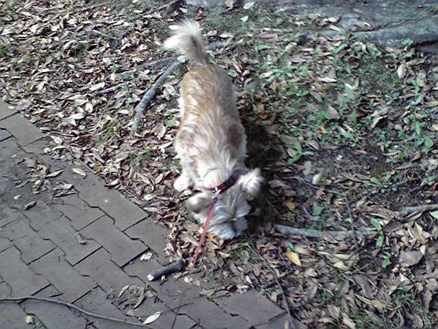 10月27日台風犬