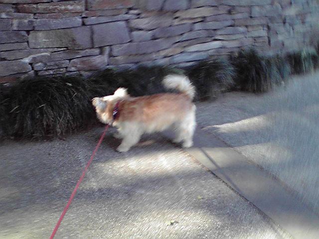11月4日ヨイテンキ犬