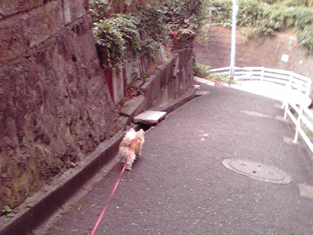 タヌキが住んでる狸坂