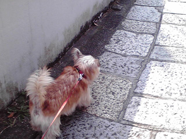 11月12日ビュティホ犬