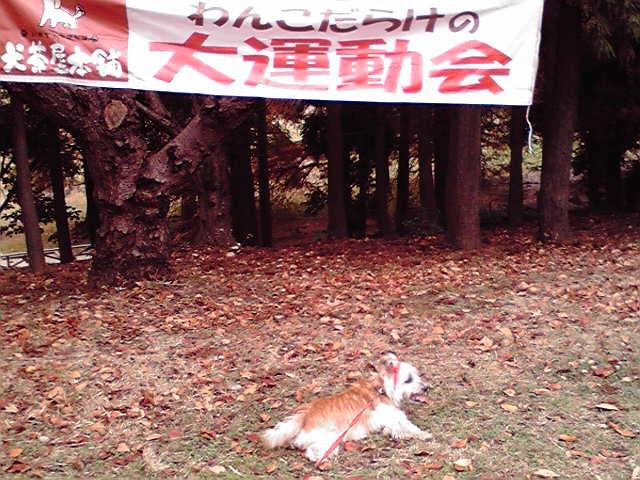 11月14日運動会犬