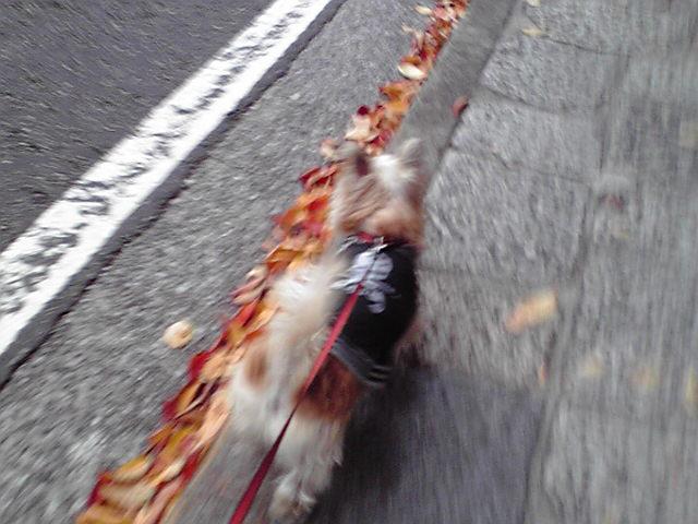 11月15日寒い犬