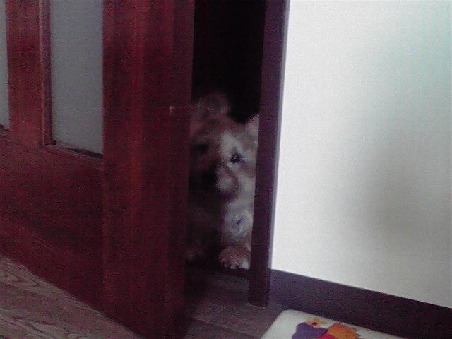 11月16日覗く犬