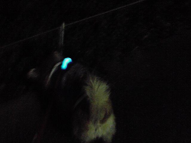 11月17日冷たい雨犬