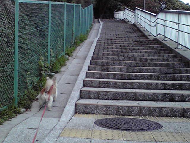 11月18日風に吹かれる犬