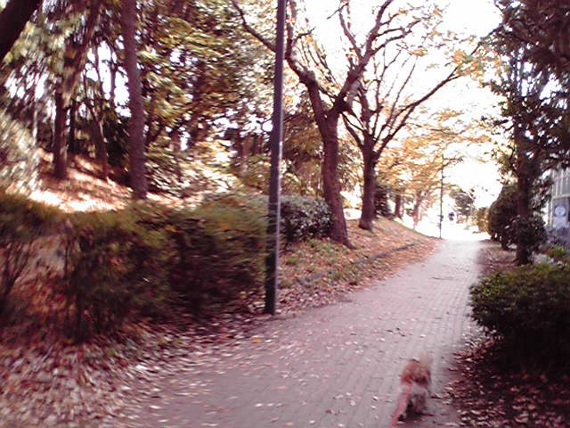 11月20日紅葉犬