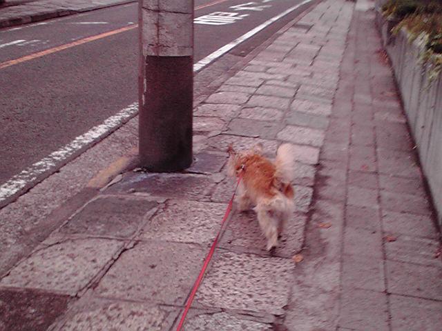 11月22日雨と雨の間犬