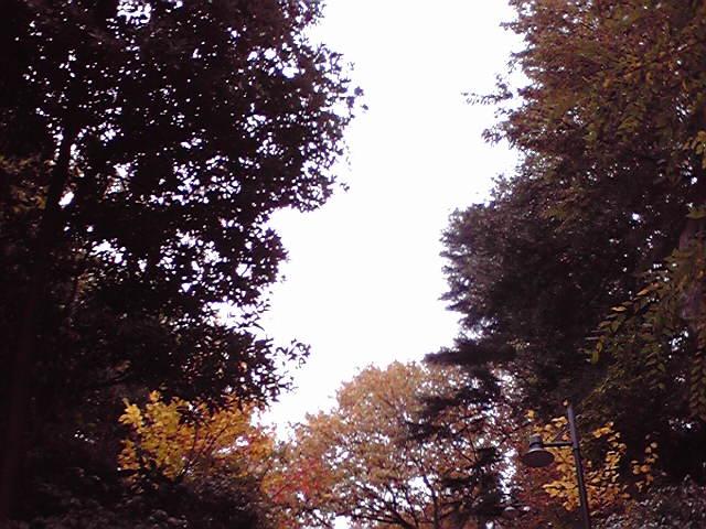 ヒマラヤ杉の木陰で