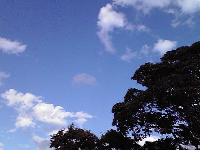 11月23日雨のち晴れ犬