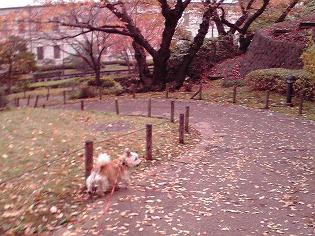 11月26日パトラッシュ犬