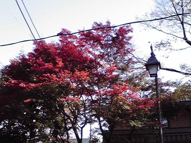 11月27日紅葉犬