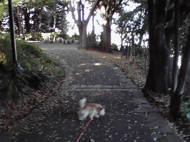 流浪の旅犬