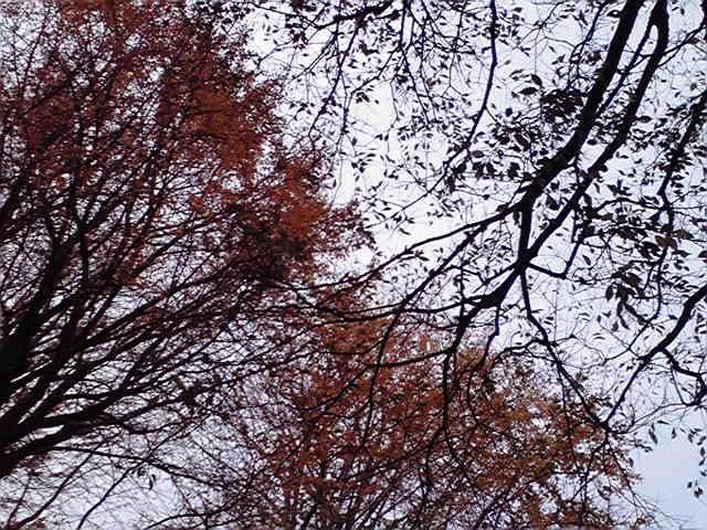 秋色のきーくん