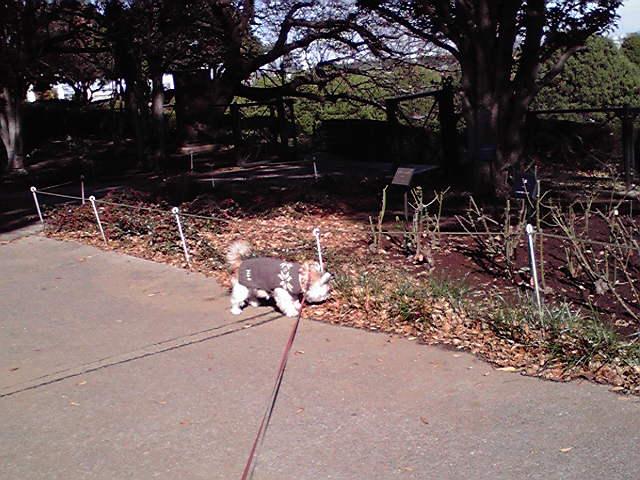 12月8日セーター犬