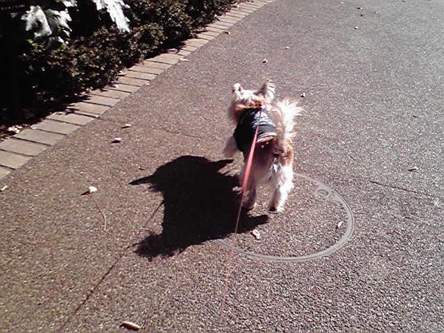 12月10日9歳になった犬