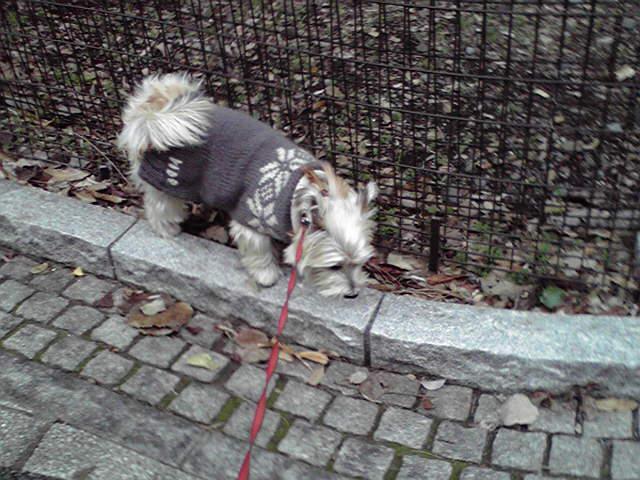 12月16日今日も良い天気犬