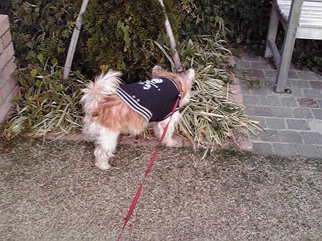12月17日買い物犬
