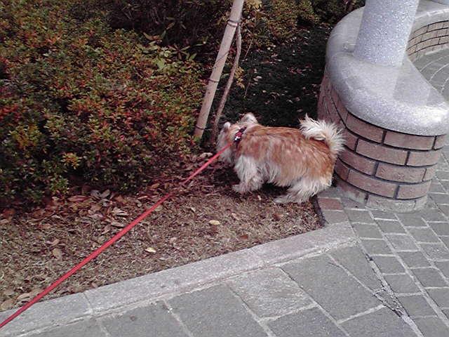 12月19日寒い犬
