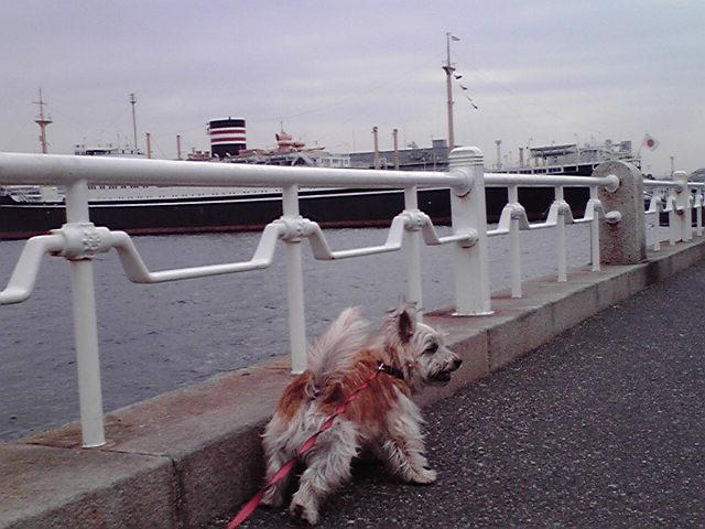 12月21日海犬