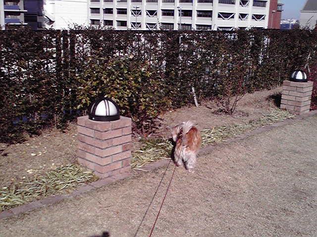 12月25日メリクリ犬