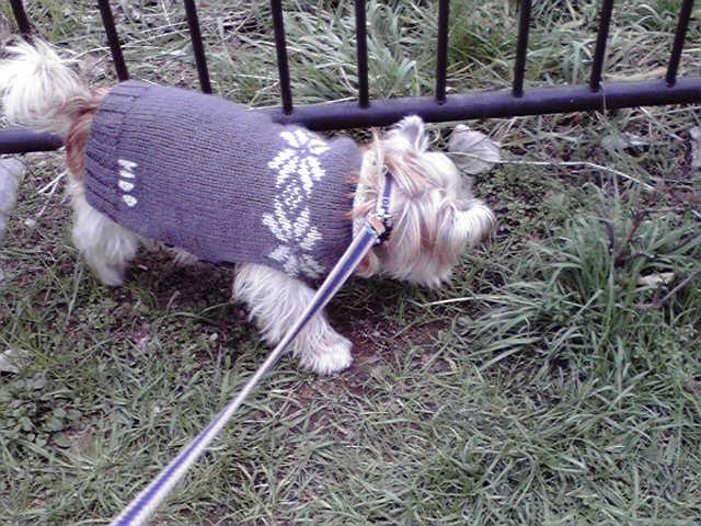 1月5日買い物犬