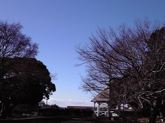 1月7日七草犬