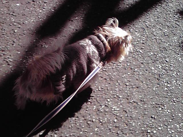 1月13日お昼の犬