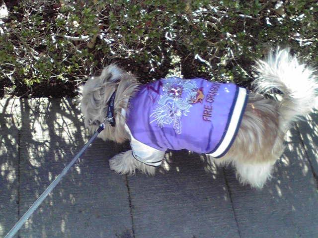 1月18日今朝は寒かった犬