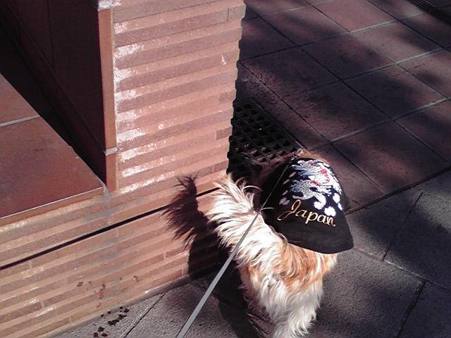1月19日長旅犬