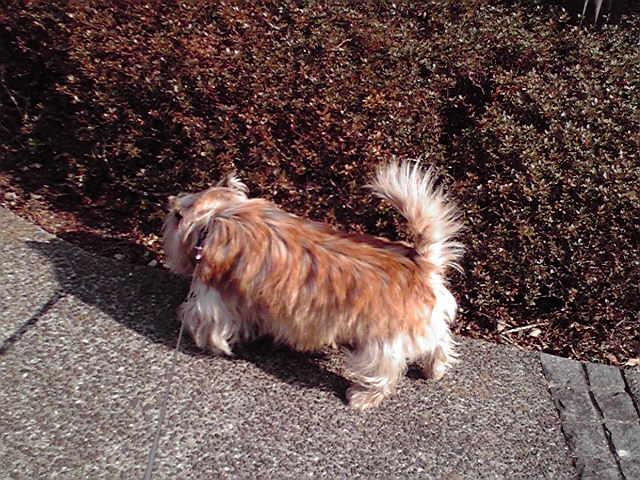 2月7日復活犬
