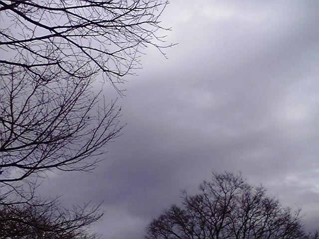 2月8日寒い犬
