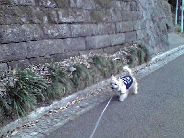 2月10日snow<br />  犬