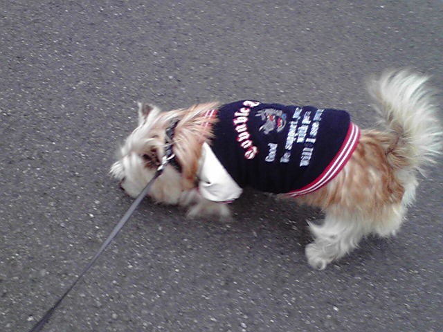 2月12日寒い犬