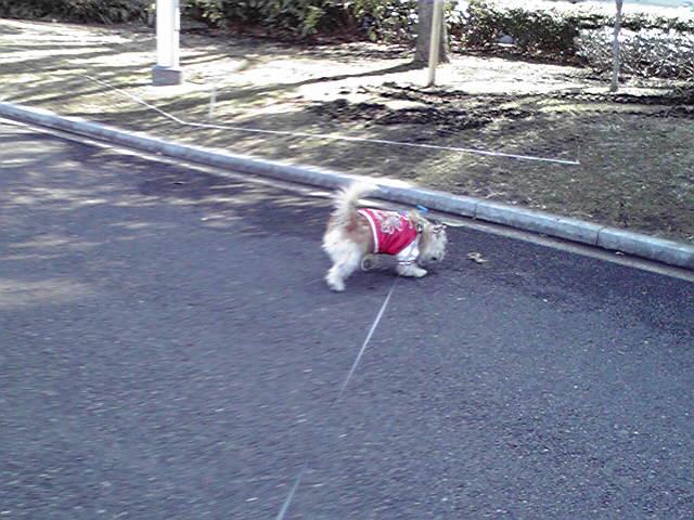 2月15日雪上がりの犬