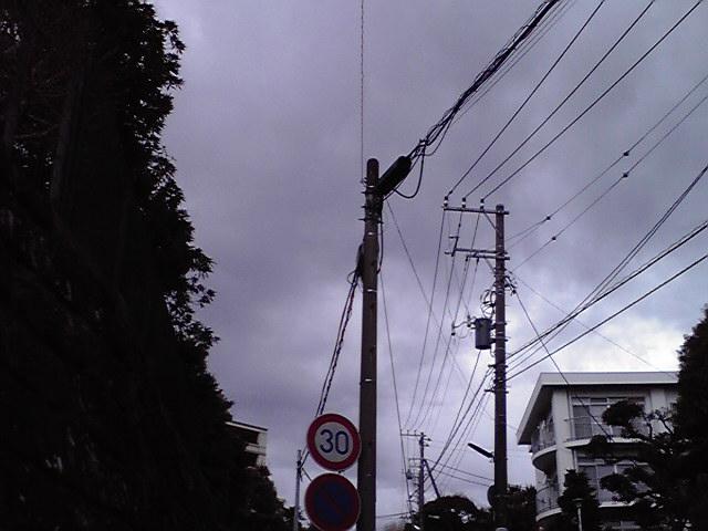 2月18日雨犬