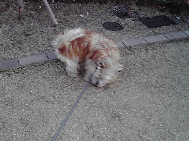 2月22日食べ放題犬
