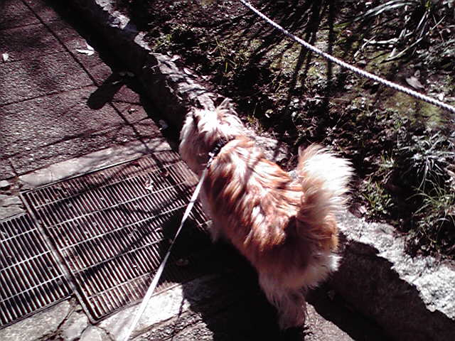 2月25日風犬