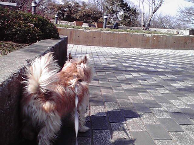 2月27日青空トリミング犬