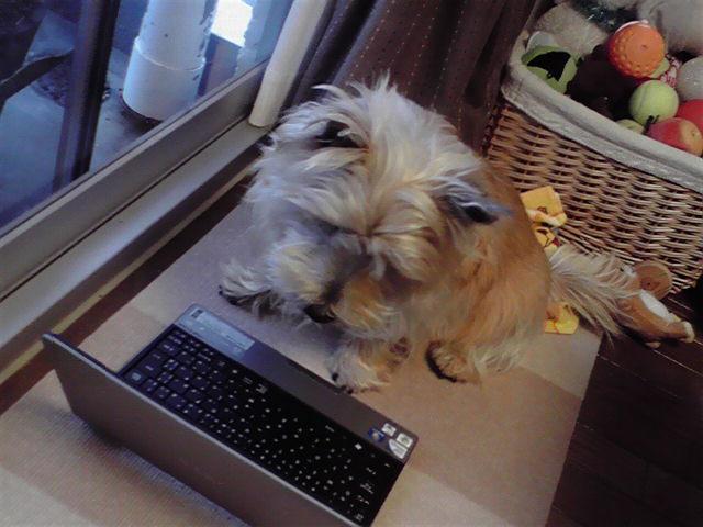 2月28日パソコン犬