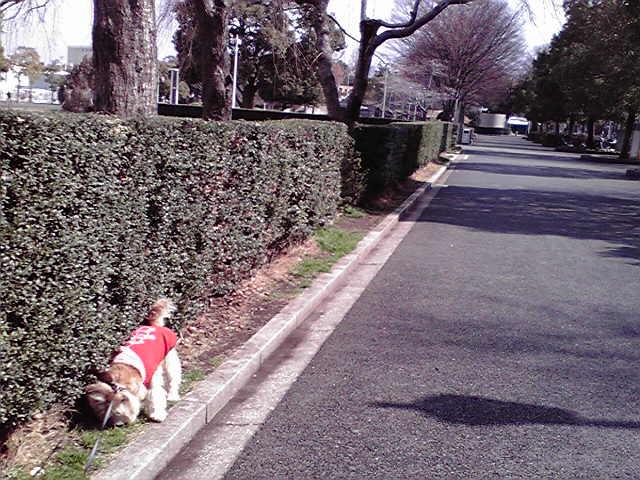 3月2日お使い犬