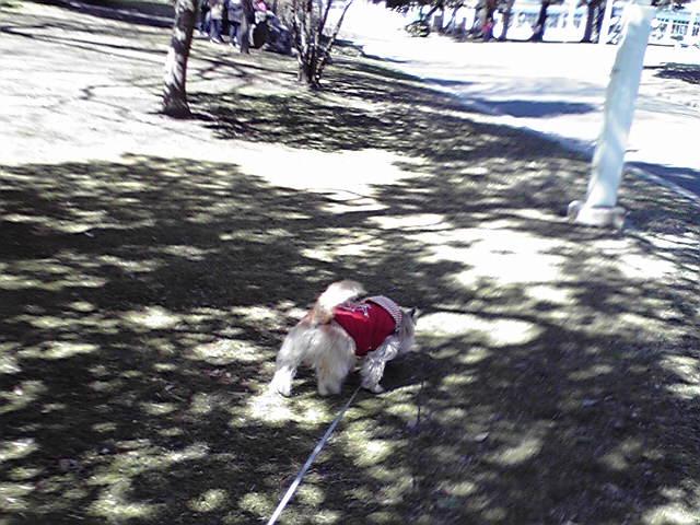 3月4日寒い犬