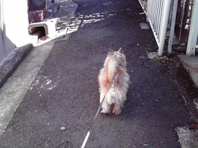 3月5日春犬