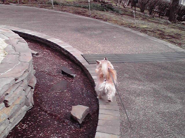 3月6日あったかい犬