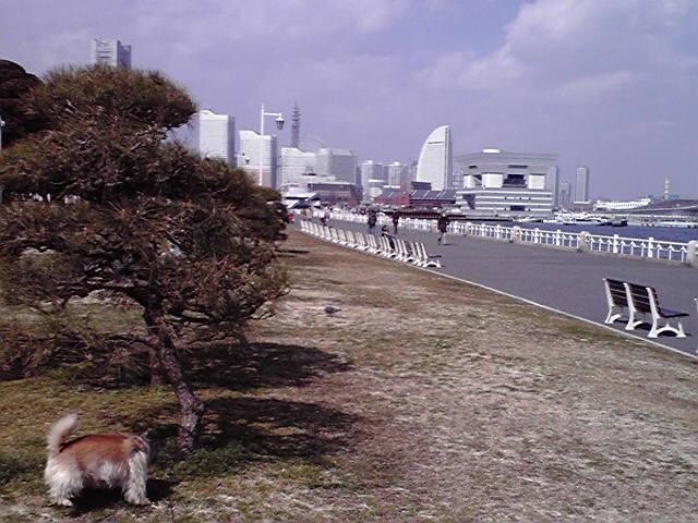 3月9日海の犬