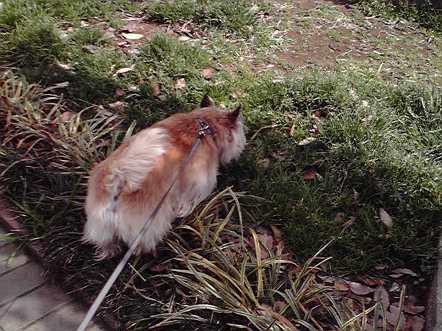 3月20日ヲザキ犬