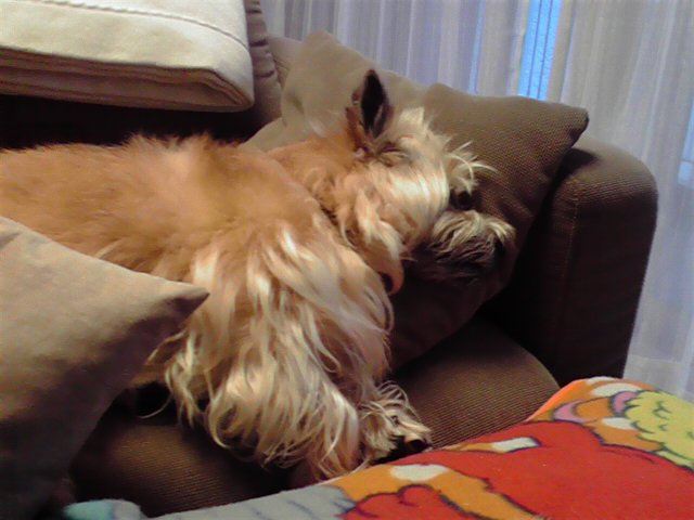 3月23日また地震犬