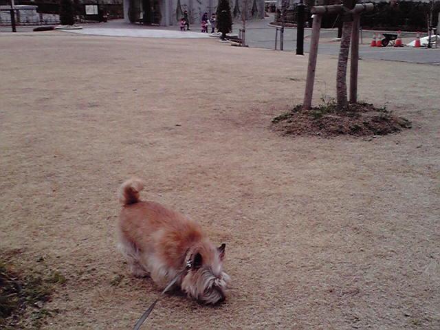 3月28日ドタバタ犬
