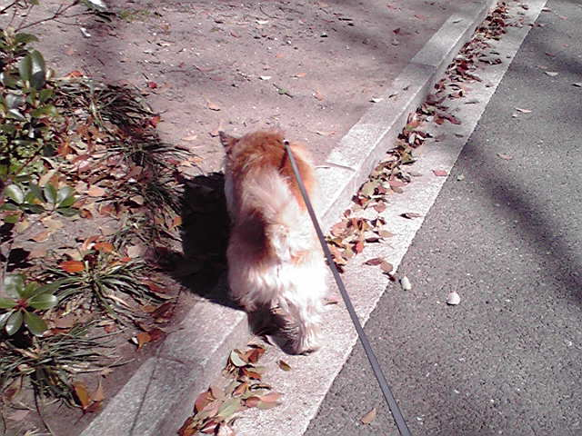 4月1日爛漫犬