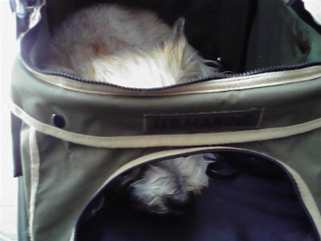 4月7日トリミング犬
